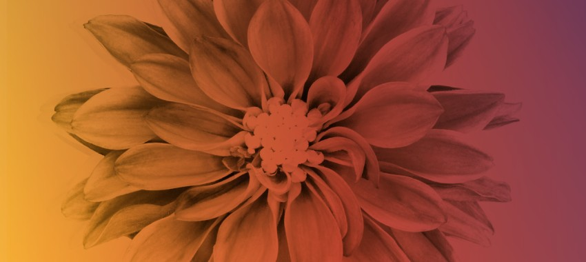 16 Facts You Didn't Know About Color and Marketing